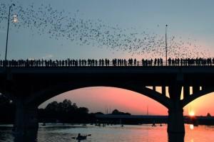 Congress-Avenue-Bridge-and-the-bats-Austin